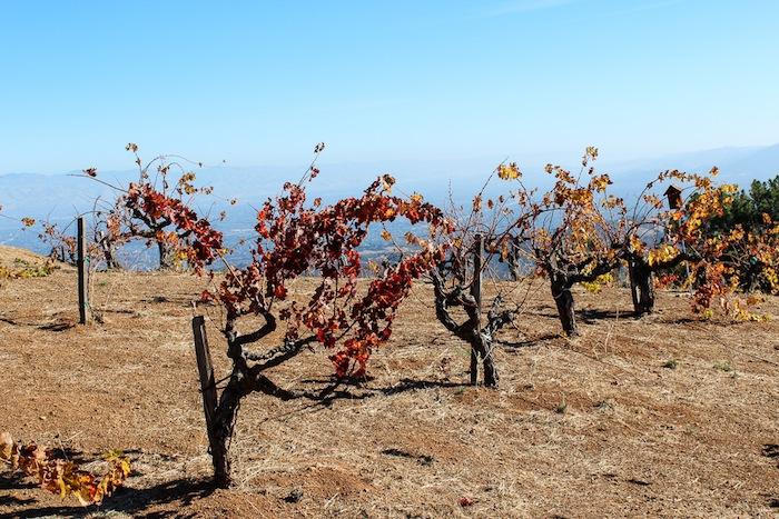 Santa Cruz Mountains Wineries