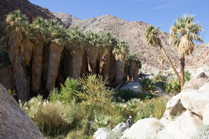 palm canyon trail anza borrego californie
