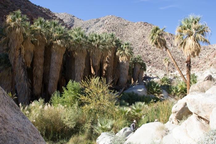 palm canyon trail anza borrego californie