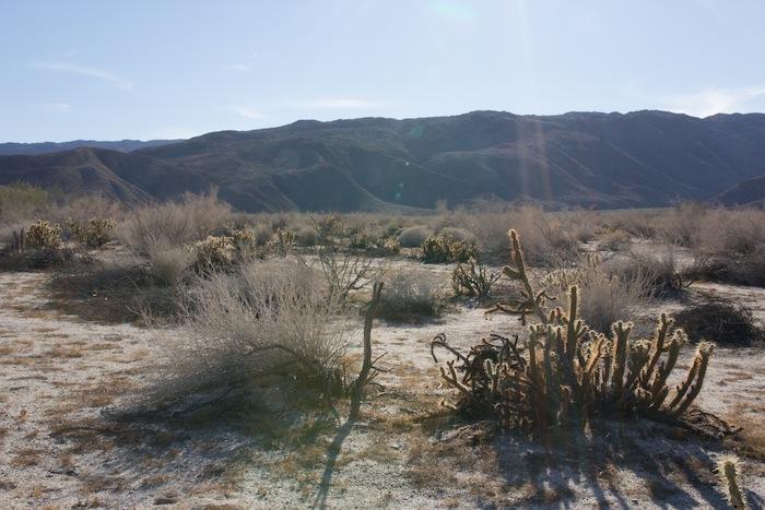 photo de désert anza borrego californie