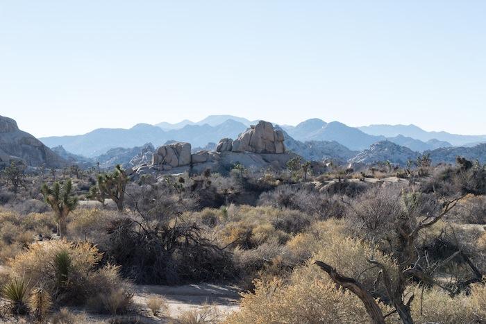 l'horizon de Joshua Tree : la ligne bleue des montagnes, derrière les rochers