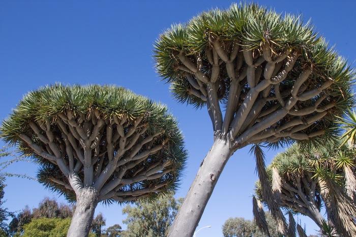 Le jardin des cactus à Balboa Park