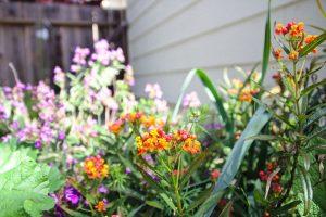 Fleurs Jardin Californie