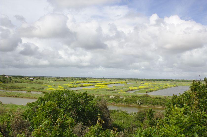 Vue Marais des oiseaux oleron