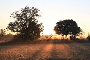 Champ en Dordogne au lever du soleil