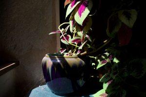 La plante_01