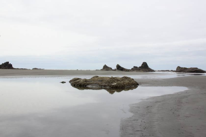 plage d'Olympic National Park