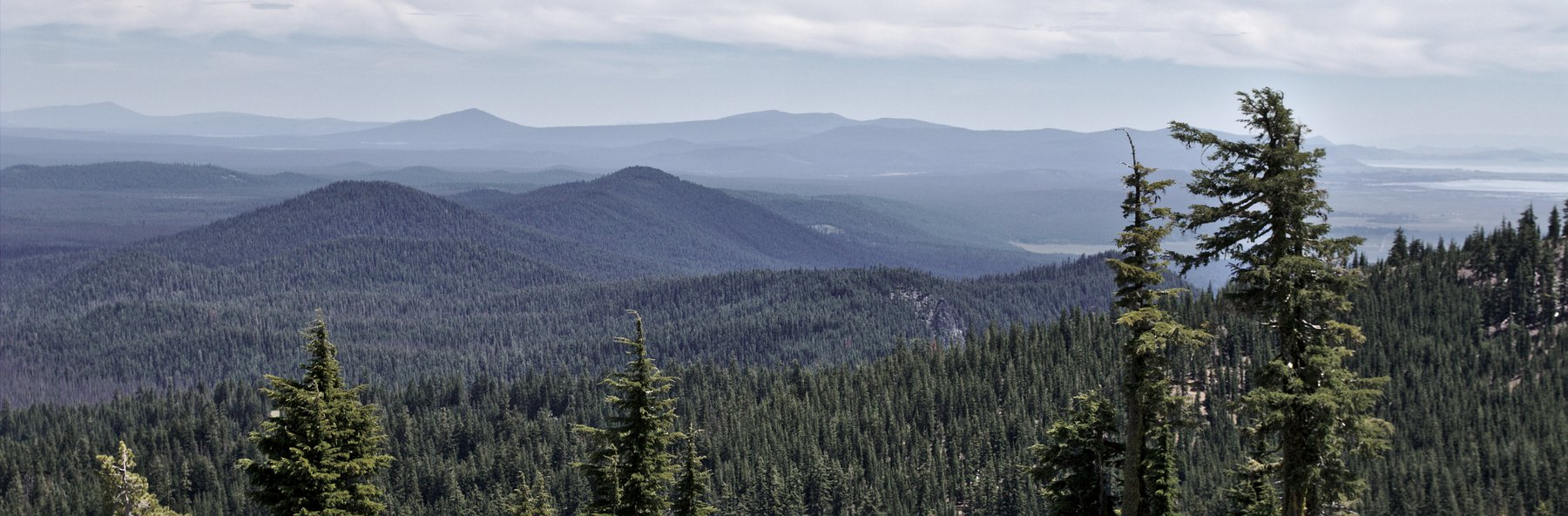 forest-view-oregon_01