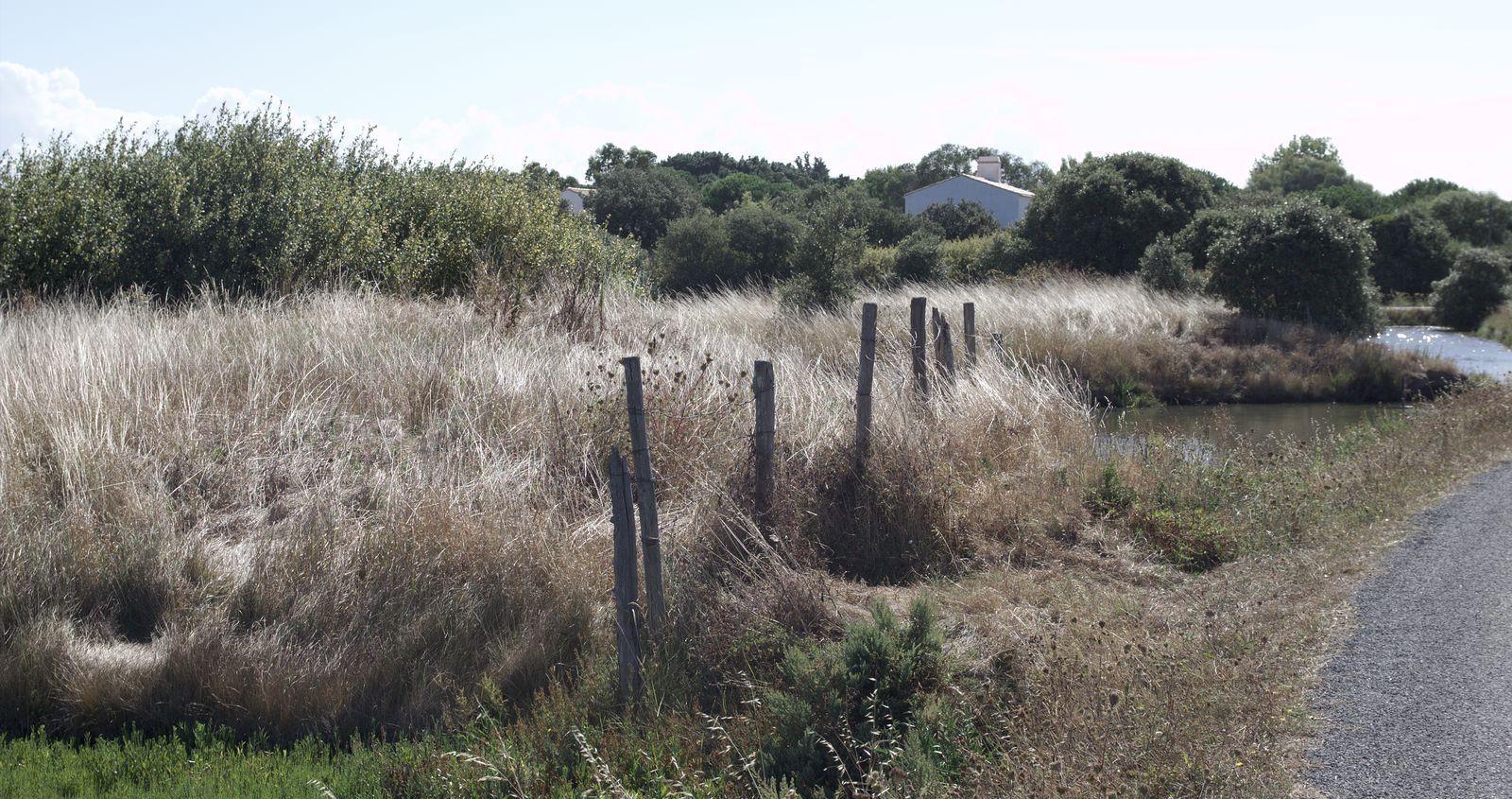 paysage-de-noirmoutier