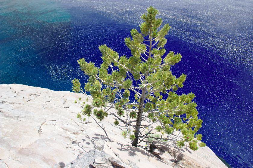 Le bleu turquoise de Crater Lake