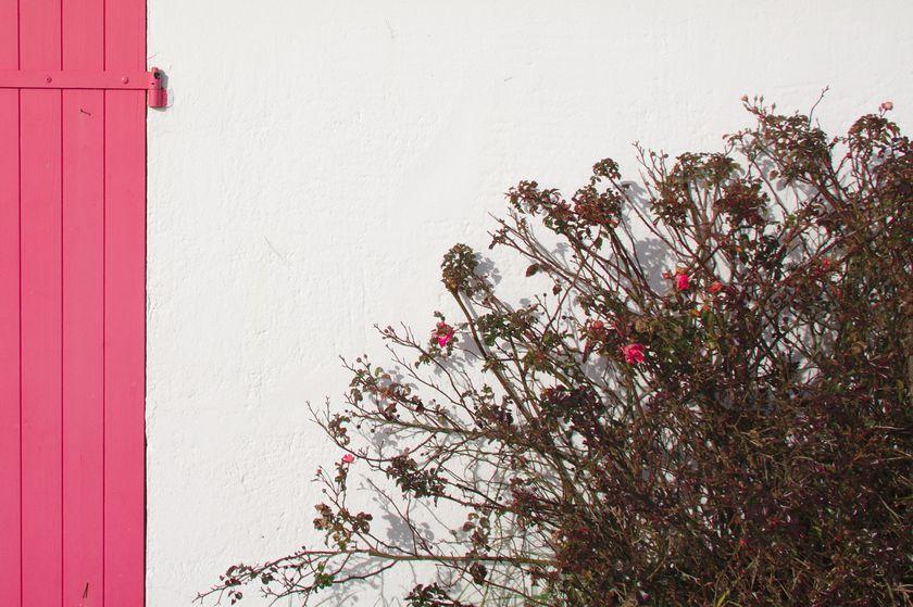 végétation hivernale