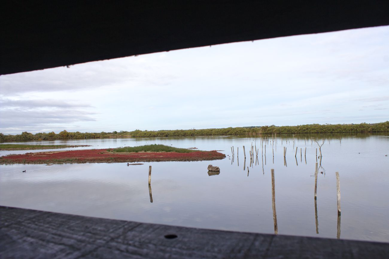réserve du teich - bassin d'arcachon