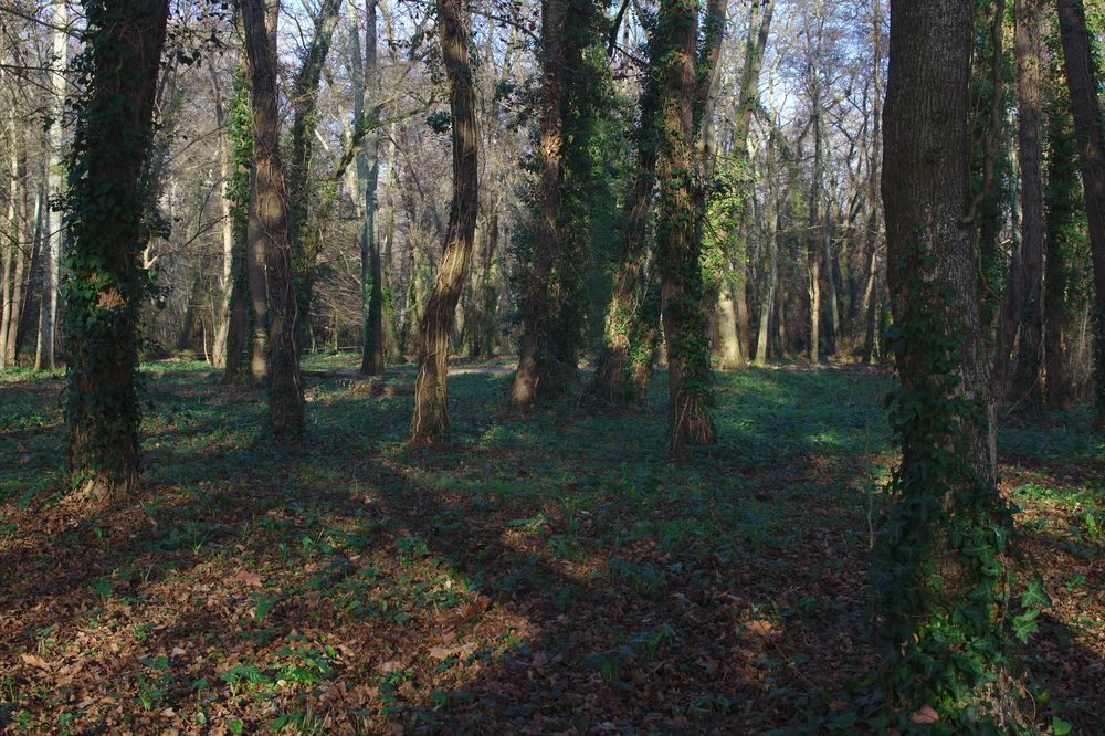 parc de Majolan à Blanquefort